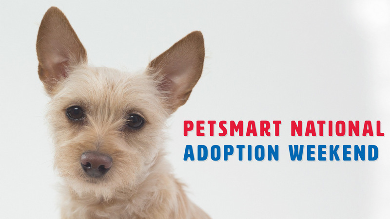FB-EventBanner-National-Adoption-Weekend.jpg
