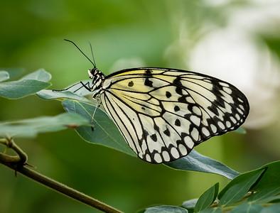 Butterflies Carleton University 20161-S.jpg