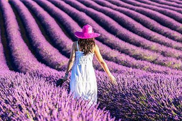 缩略图 | 世界上最浪漫的事:就是陪你一起去看薰衣草!