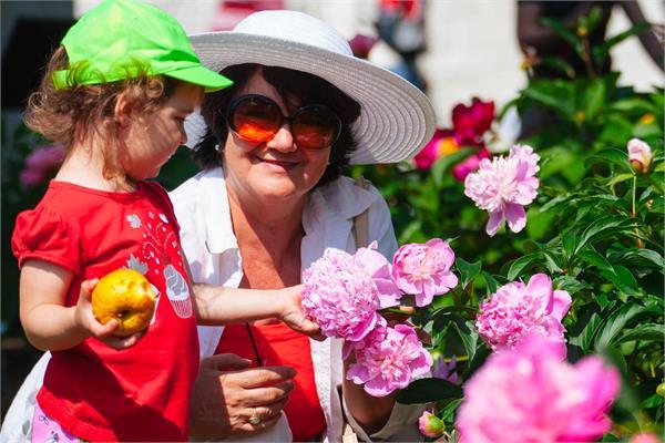 缩略图 | 【免费活动】加拿大也能看牡丹!!本周末快到安省牡丹花会品国色天香吧!