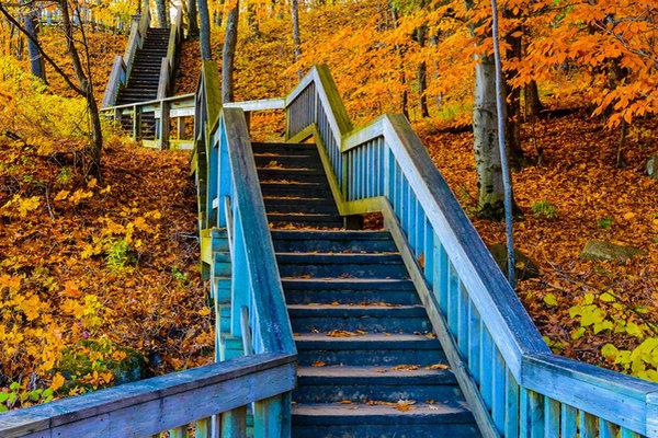 缩略图 | 乘免费公交到加蒂诺公园看红叶啦!美景野餐散步骑车任你玩!