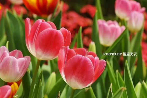 缩略图 | 50种常见有毒植物:虽然已经是百花儿开,路边的野花你不要采!