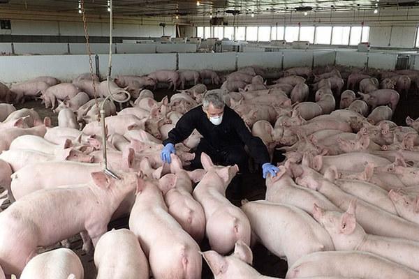 缩略图 | 中国暂停所有加拿大肉类对华出口,中使馆回应伪造卫生证书!
