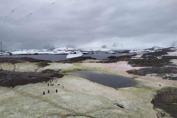 缩略图 | 糟糕!南极已成了这般模样!地球快要失控了!