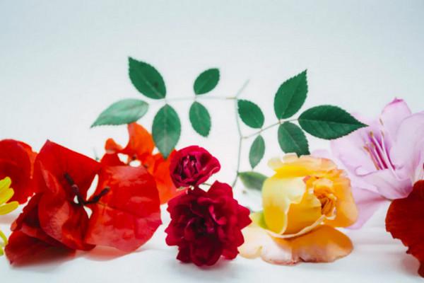 缩略图 | 今年还不买玫瑰么?盘点加拿大全网鲜花配送,浪漫当天就能送到家!