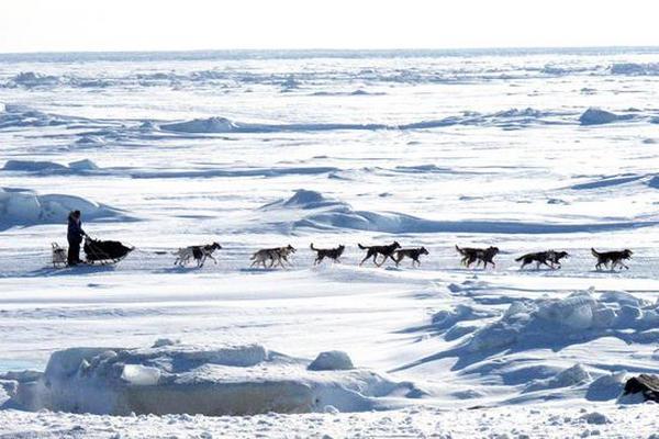 缩略图 | 为防病毒,加拿大夫妇变卖家产逃至6000公里外北极圈,秒被截!