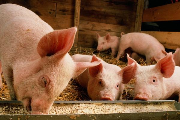 缩略图 | 加拿大增加进口美国猪肉 将本国猪肉运往中国