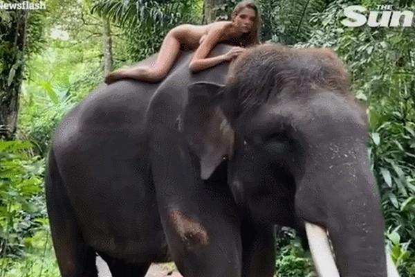 缩略图 | 22岁俄罗斯女模特裸体骑濒危大象,网友气愤不已,当事人道歉