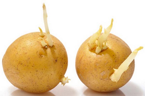 缩略图 | 【生活小妙招】土豆怎么放不发芽:4个方法不可不知