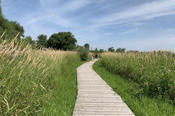 缩略图 | 【免费】Chapman Mills 自然保护区:在美丽的栖息地中,和家人一起漫步在木质人行道上!