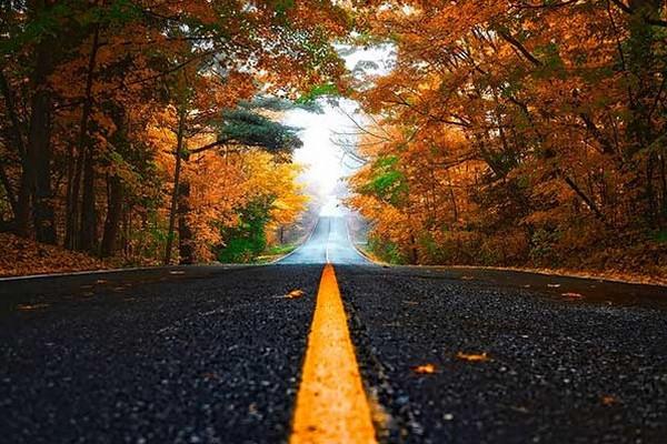 缩略图 | 安省这18个省立公园变黄橙红,阿岗昆全境变色!