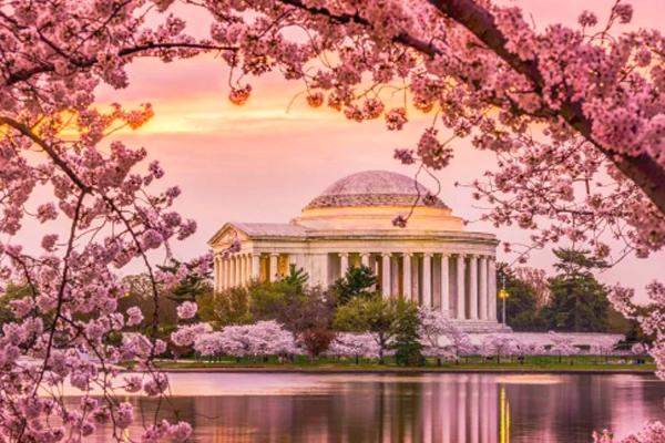 缩略图 | 华盛顿DC**樱花节**最全攻略,复活节出去看看春天吧!